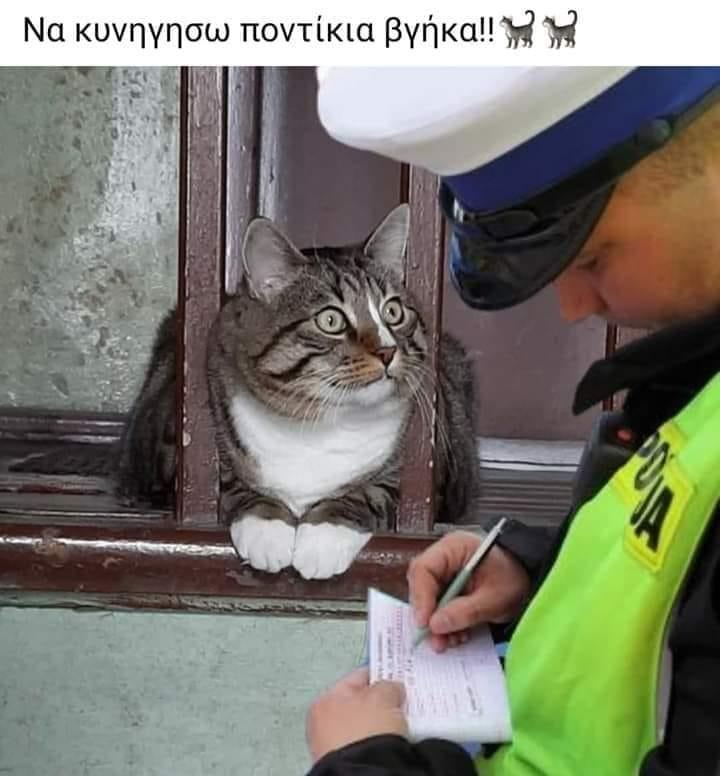 il gato